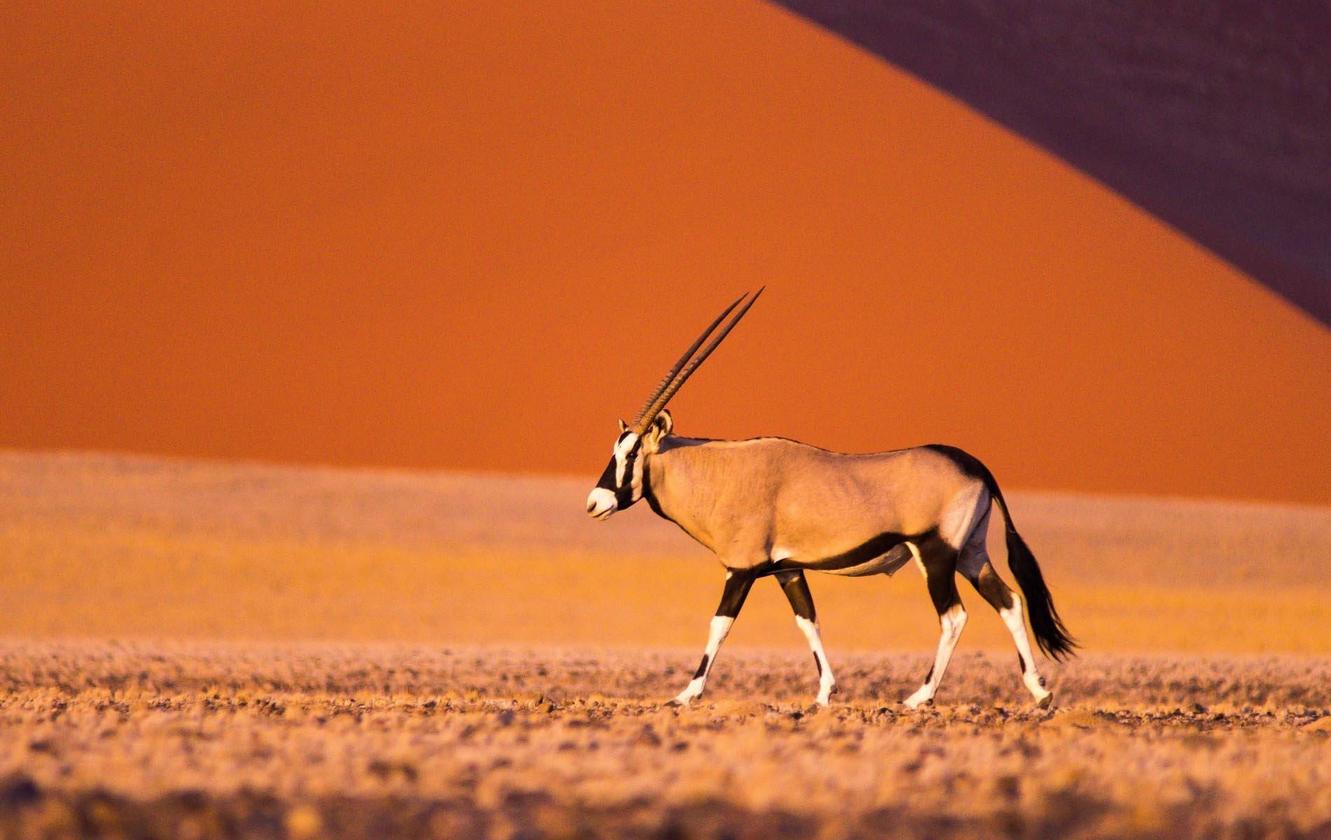 namibië_regiosmall.jpg