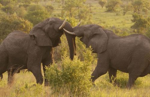 groepsreis het beste van zuid-afrika sfeerfoto.png