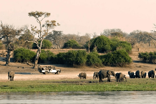 chobe national park  011.png