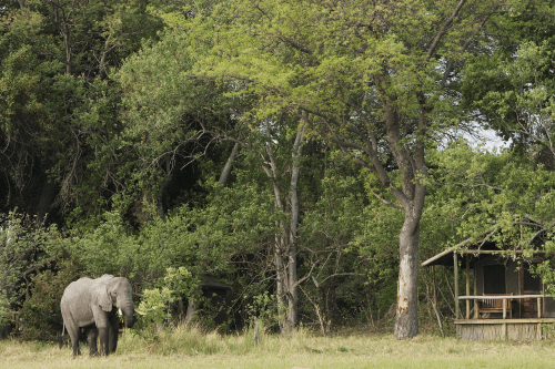 shinde camp olifant voor tent.png