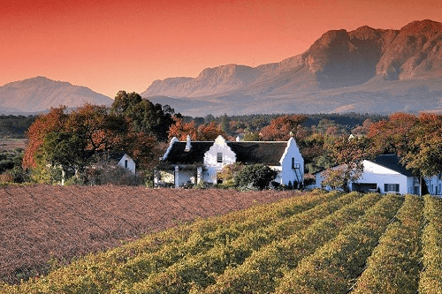 stellenbosch wine 011.png