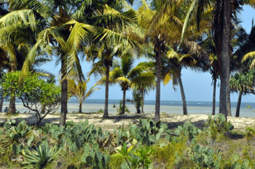 bagamoyo travellers lodge uitzicht strand.png