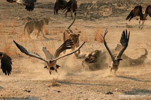 south luangwa 001.png