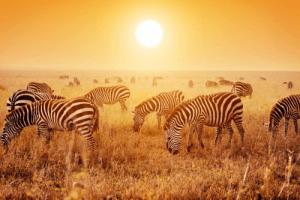 serengeti 002.png