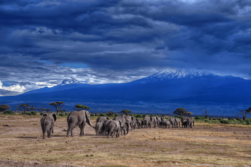 amboseli national park 002.png