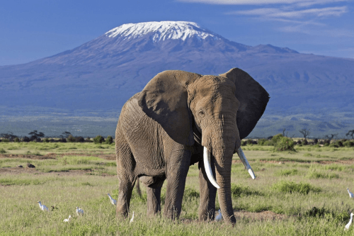 amboseli national park 003.png