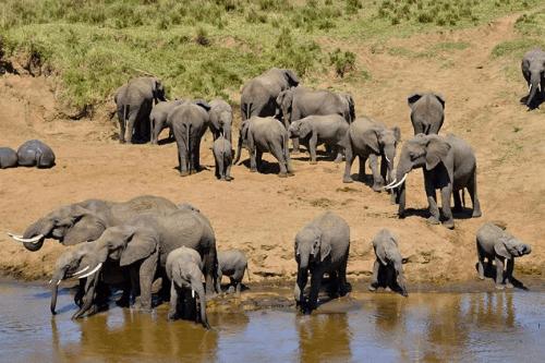 tarangire olifanten 001.png