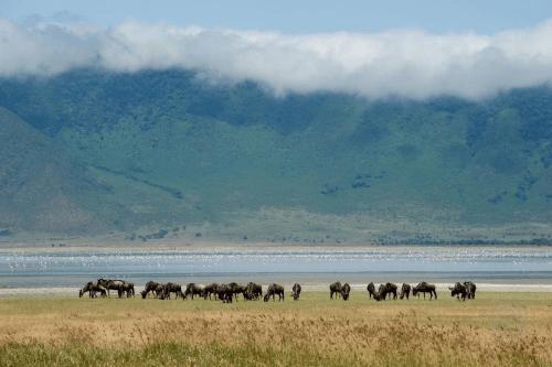 ngorongoro krater sfeer.png
