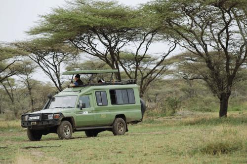ranger safari voertuig 007.png