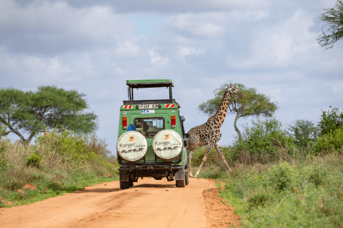 ranger safari voertuig 009.png