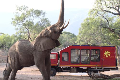 sunway safaritruck 004.png