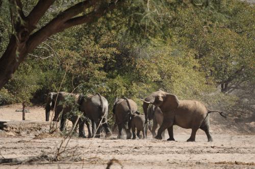 brandberg elephants.png
