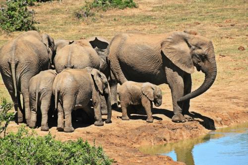 elephant-1092508_1280-1002.png