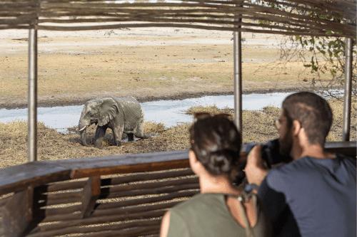 leroo la tau zicht op olifant vanuit de schuilplaats.png