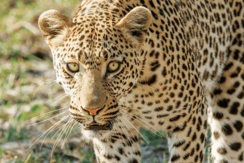moremi-game-reserve-wildlife-01-8.png