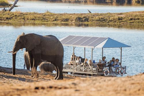 chobe game lodge - river safari-03.png