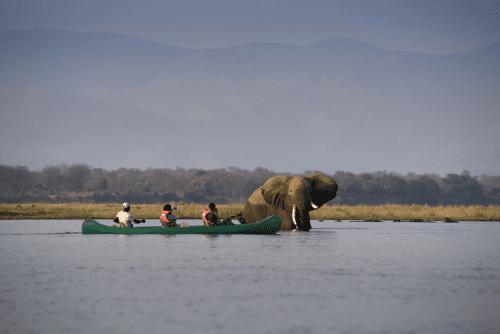 zambezi expeditions kano safari zambezi rivier.png