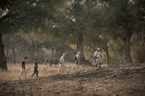 zambezi expeditions wandel safari.png