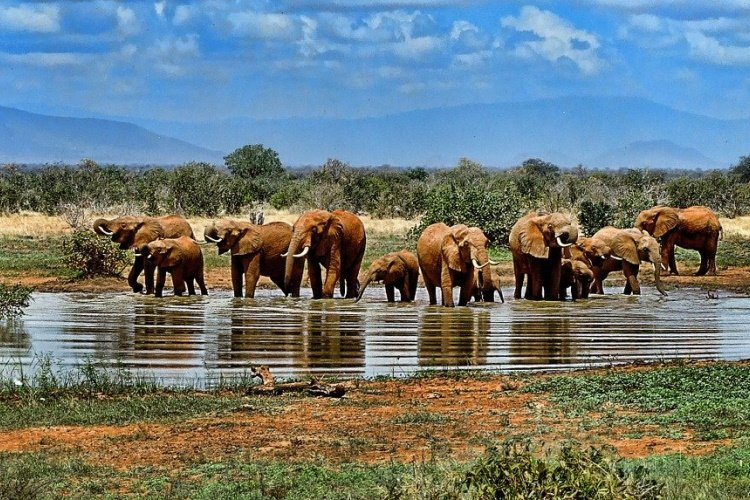 elephant addo zuid-afrika.jpg