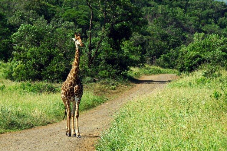 south-africa-kruger.jpg