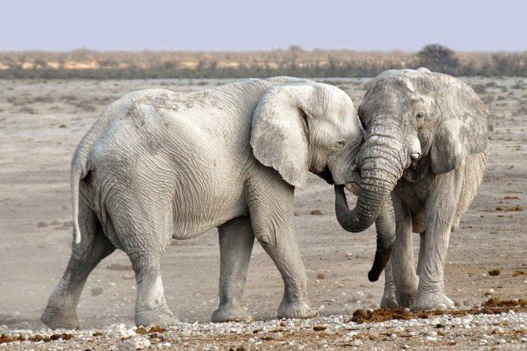 elephants namibie.jpg