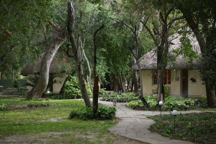 island safari lodge tuin.jpg