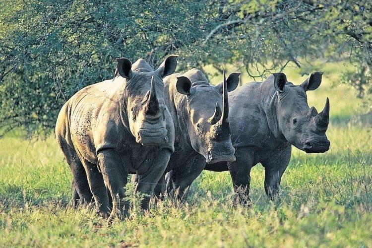 khama rhino sanctuary hippo.jpg