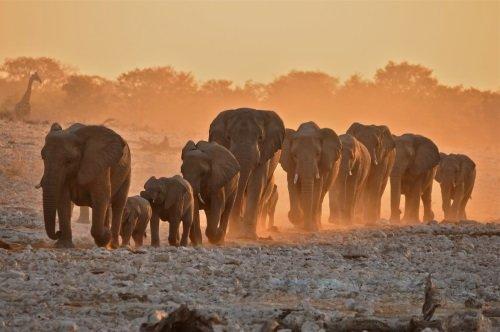 Rondreis Namibie - Namibie in vogelvlucht - autorondreis dag 06