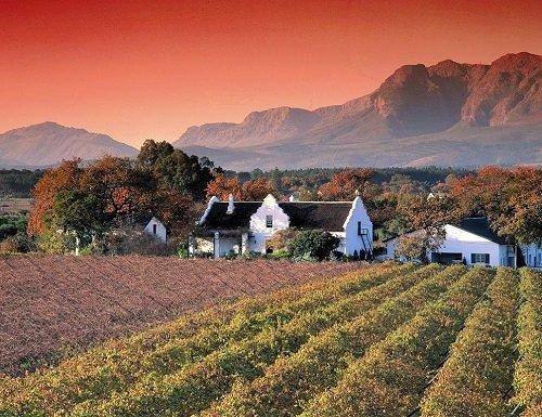 stellenbosch wine