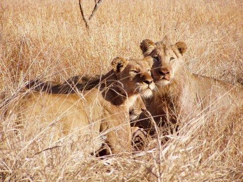Krugerpark groepsreis