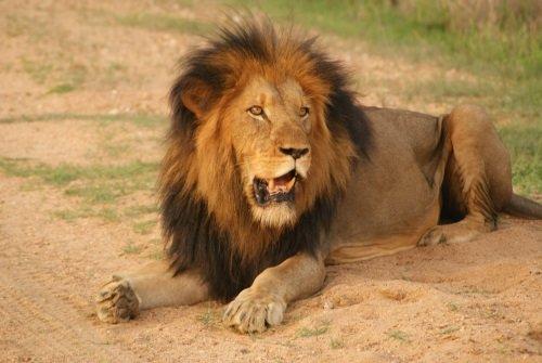 De Wildernis van Botswana & Zimbabwe impressie