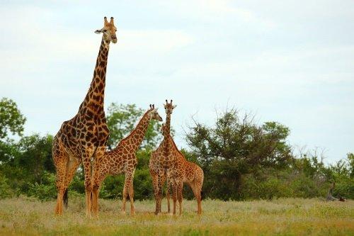 Botswana_Wildlife_Breakaway