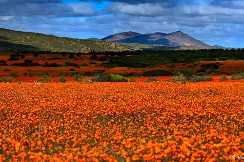 northern cape spring