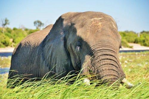 Thebe River Safaris omgeving chobe