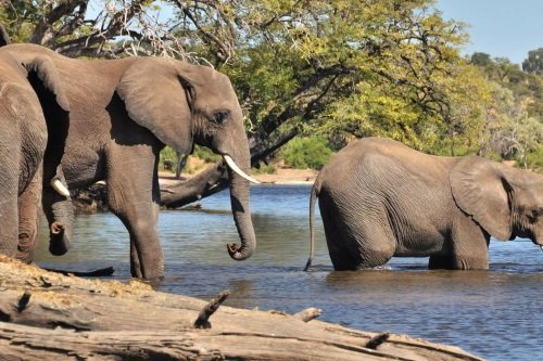 Thebe River Safaris omgeving chobe 2