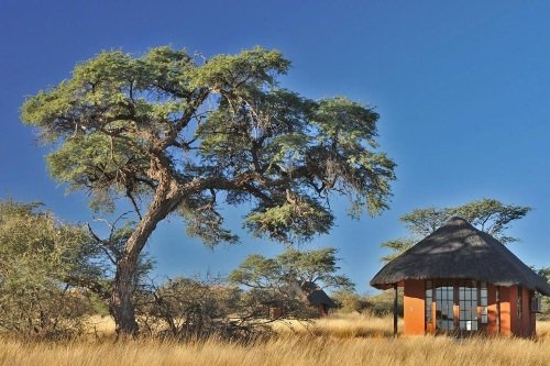 Camelthorn Kalahari Lodge rondavel
