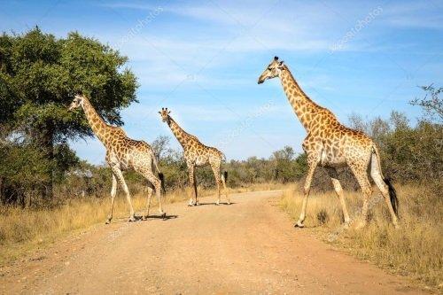 Sfeer Kruger 002