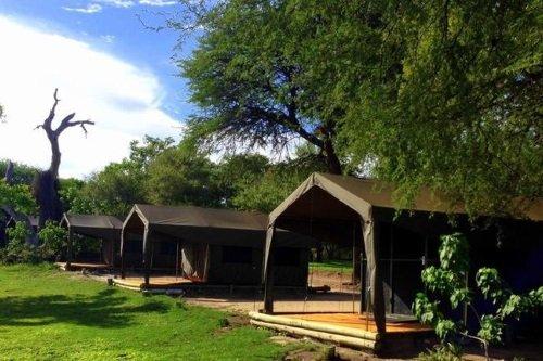 Drifters Maun Lodge tent