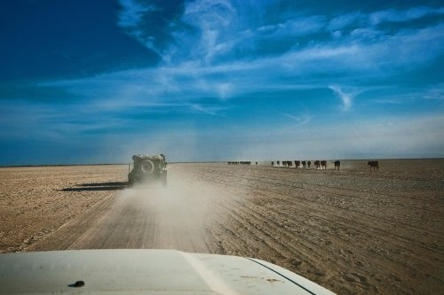 Elephant Sands 004