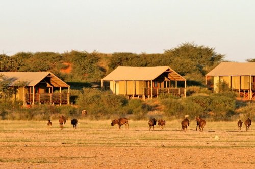 Intu Afrika Suricate Kalahari Lodge 005