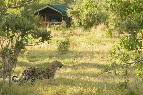 Sango Safari Camp tent met wild 001