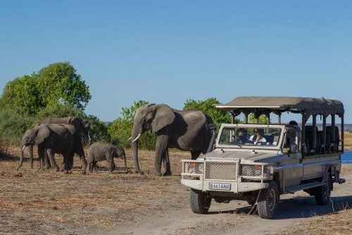 Chobe Game Lodge gamedrive