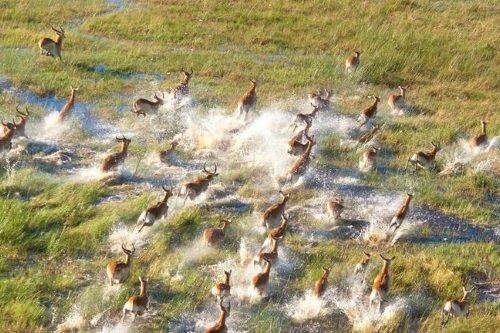 Okavango Delta vanuit de lucht