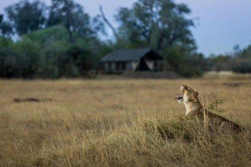Machaba Camp wild