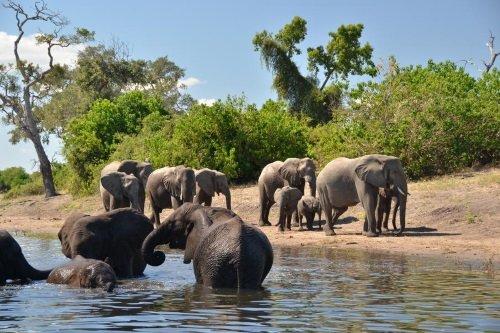 Muchenje Safari Lodge onderweg tijdens boottocht chobe rivier