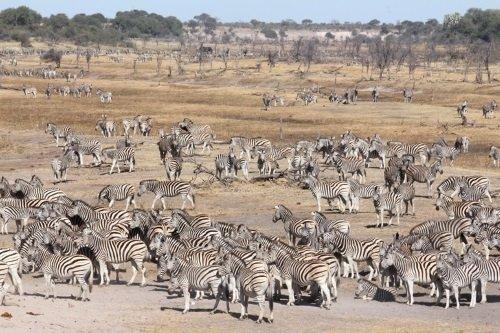 Makgadikgadi Pans National Park 002